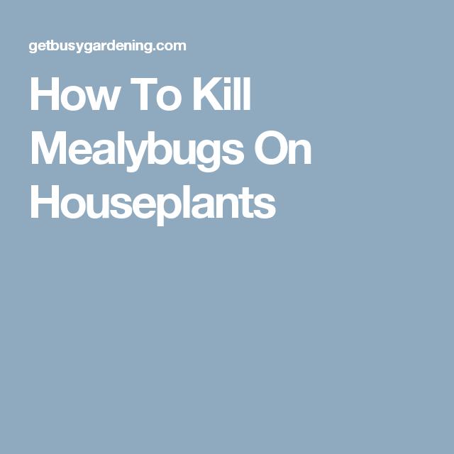 How To Kill Mealybugs On Houseplants
