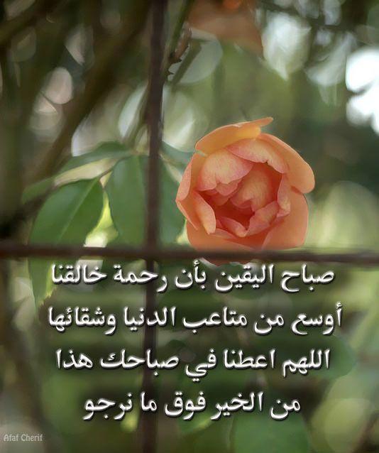 صباح اليقين بأن رحمة خالقنا أوسع من متاعب الدنيا وشقائها اللهم اعطنا في صباحك هذا من الخير فوق ما نرجو Plants Flowers Rose