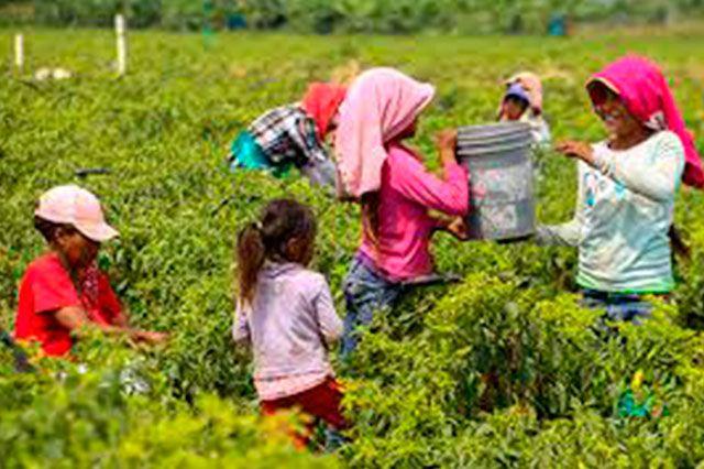 m.e-consulta.com | Rescatan a 63 niños jornaleros que eran explotados en Coahuila | Periódico Digital de Noticias de Puebla | México 2015