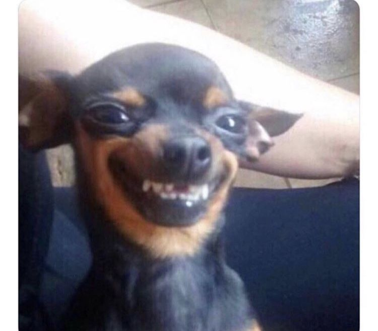 Dog Smiling With Teeth Meme Funny Animal Pictures Funny Dog Memes Animal Memes