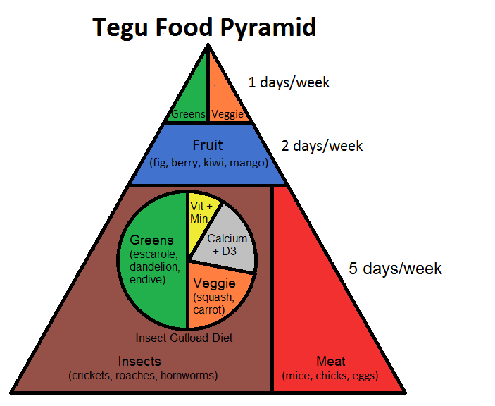 learn about tegu nutrition with the tegu food pyramid reptile
