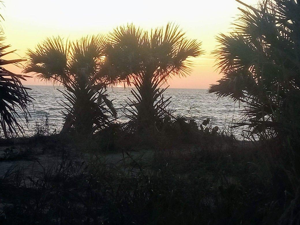 Sunset Palms Venice Beach Florida In 2020 Venice Beach Florida Florida Beaches Venice Beach