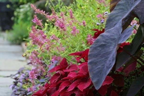 10 combinaciones de plantas perfectas en tonos otoñales.
