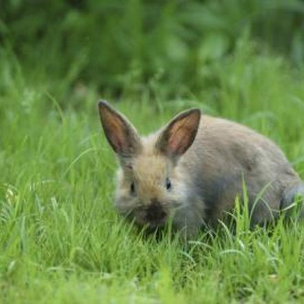 How to Use Hot Pepper to Get Rid of Rabbits in a Garden ...