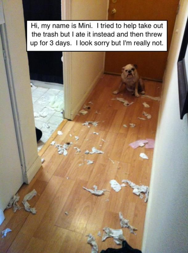 Hall Of Shame Dog Shaming English Bulldog Funny English