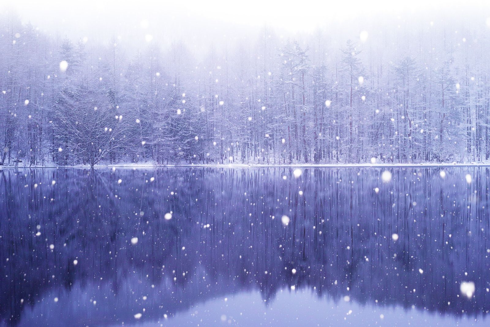 A Midwinter Night's Dream | Flickr - Photo Sharing!