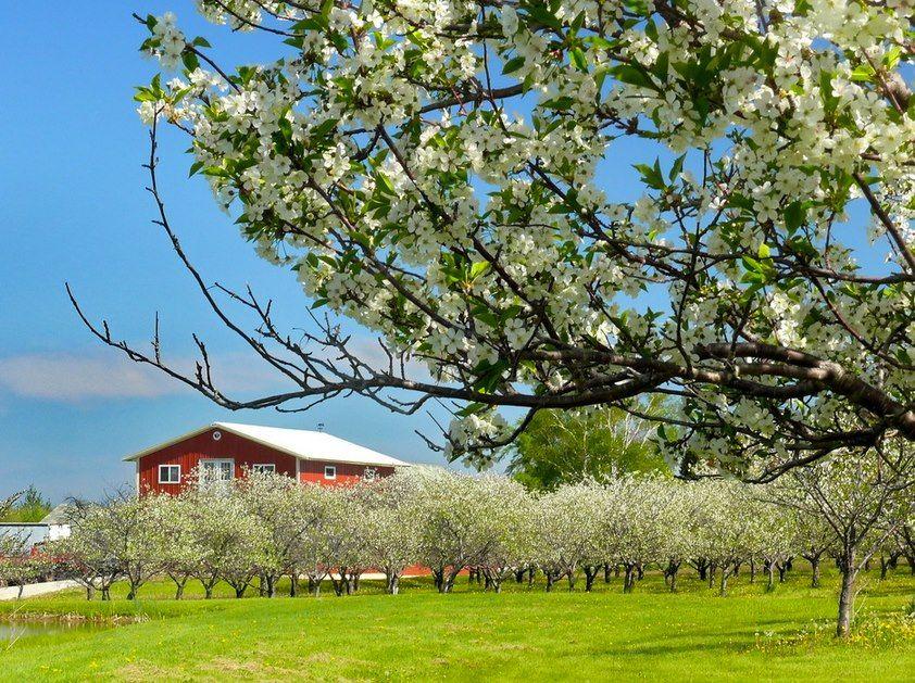 Door County Cherry Blossoms Door County Wisconsin Door County Cherries Door County