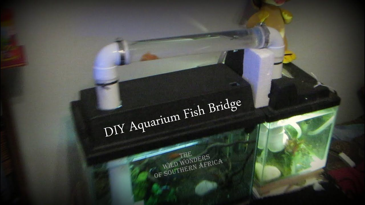 Homemade Fish Tank Decoration Ideas Luxury Diy Aquarium Fish
