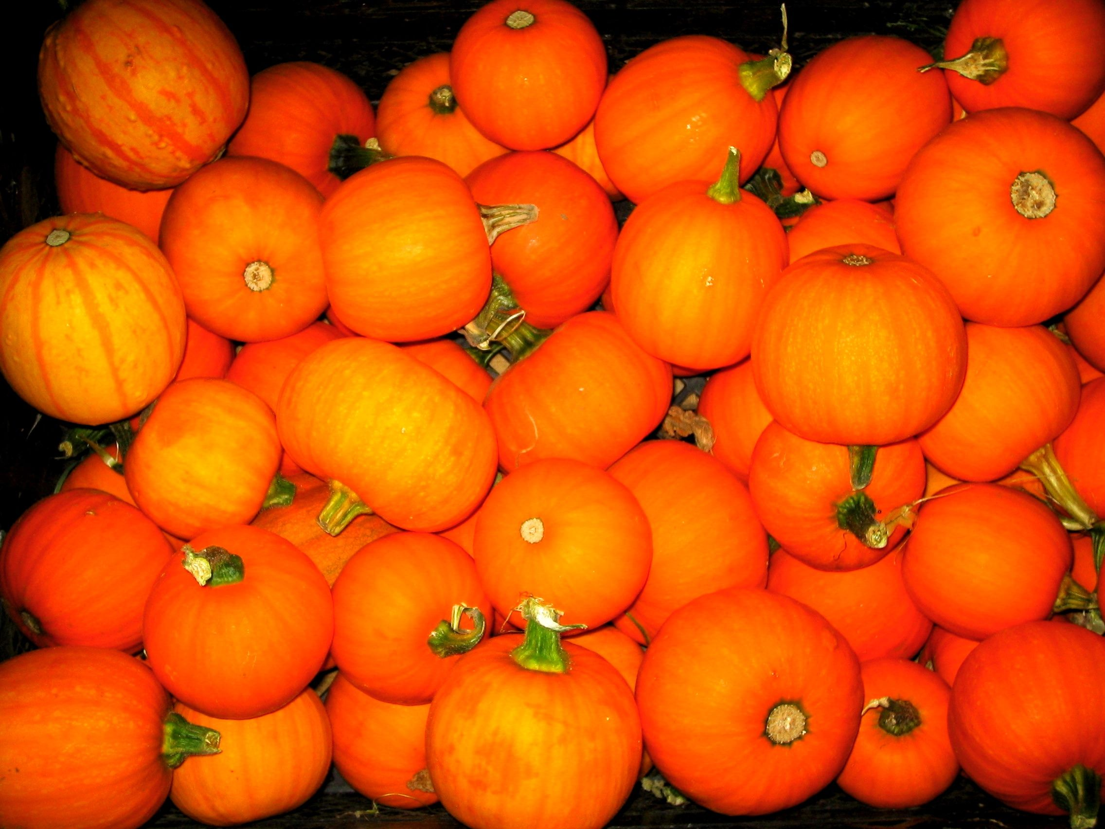 Sugarpine Pumpkins.  Cute no matter what time of year. Etsy Shop SmartBlondes