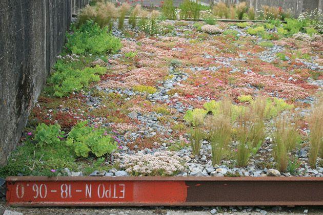 Openfield – revue ouverte sur le paysage » Imaginaires de la nature en ville
