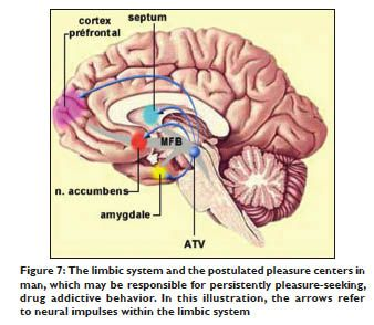 nucleus accumbens - Vaydile.euforic.co