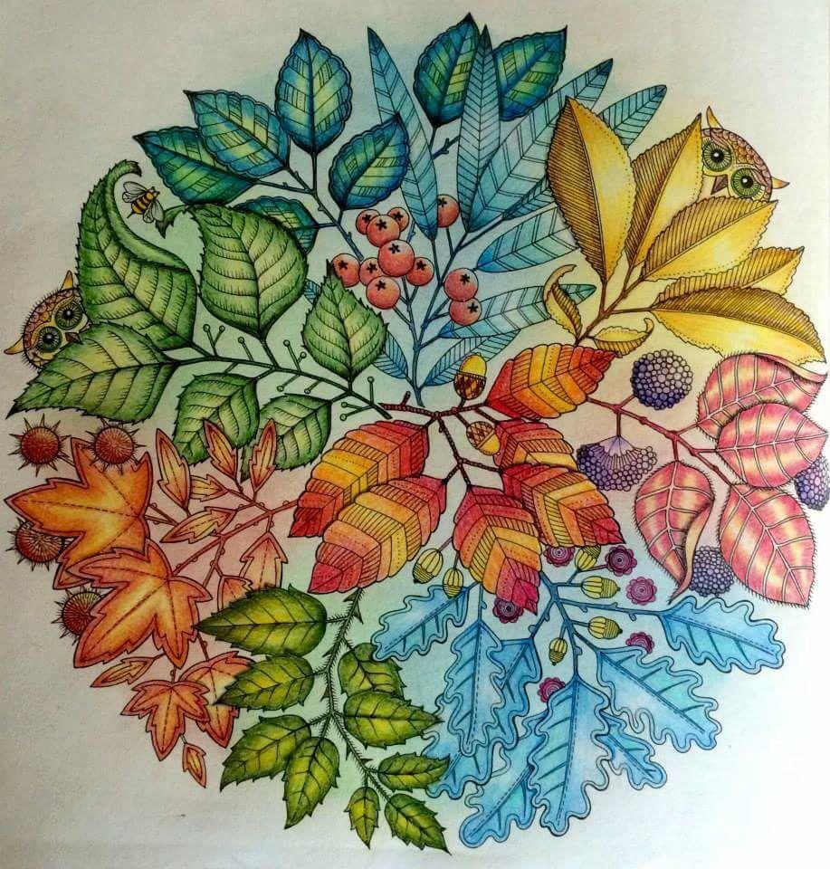 Secret garden coloring book website - Mandala Owls Secret Garden Mandala De Corujas Jardim Secreto Johanna Basford Adult Coloringcoloring Bookssecret