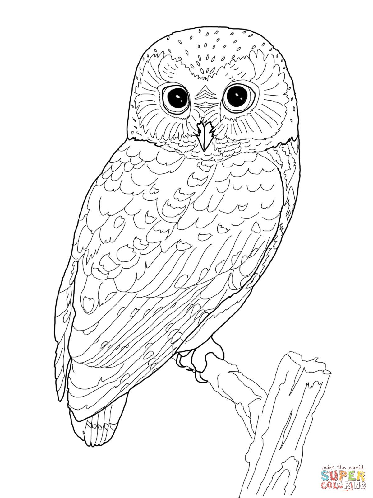 Northern Spotted Owl Coloring Page