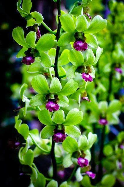 Loriedarlin Orchid Flower Beautiful Orchids Unusual Flowers