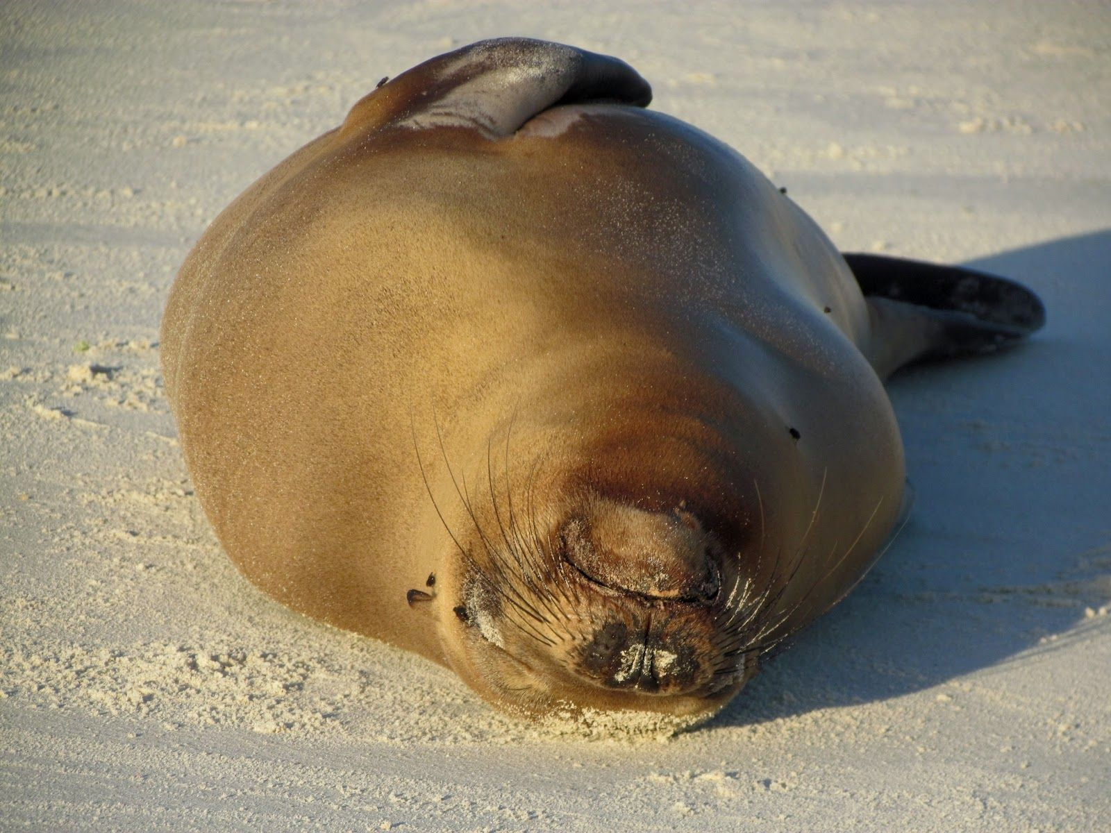 Sleepy Lazy Seal In Galapagos Islands Ecuador Pet Birds Animals Galapagos Islands