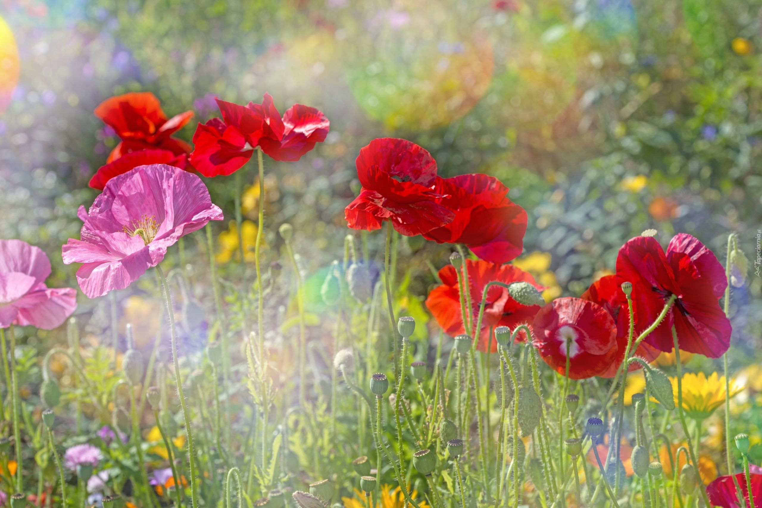 Chmury Polne Kwiaty Drzewo Gory Laka Na Pulpit Spring Landscape Scenic Photos Photography Wallpaper