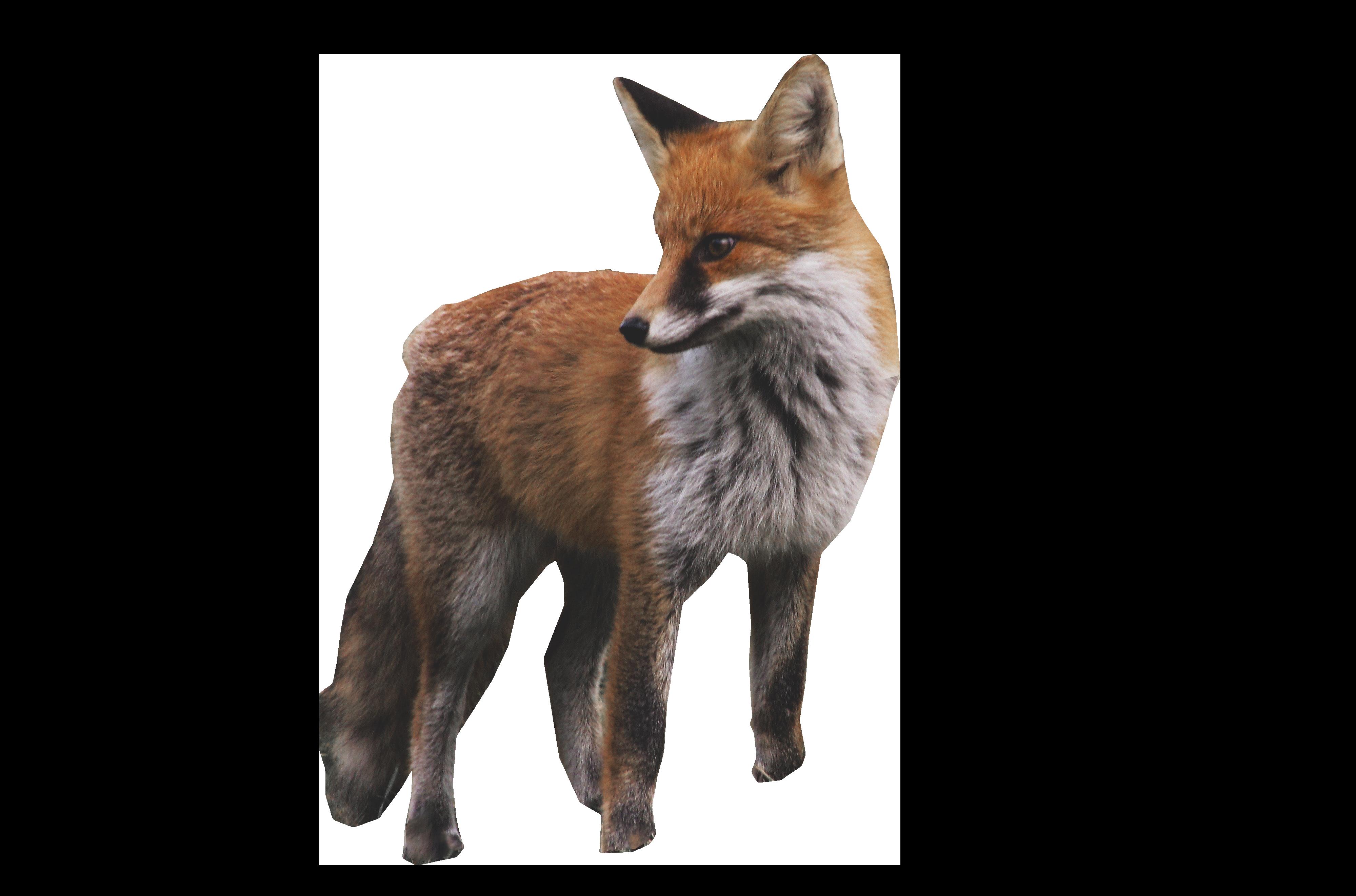 Fox Standing PNG Image Animals, Fox, Fox drawing