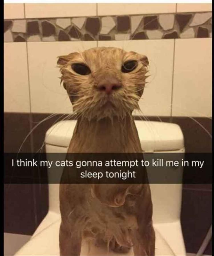 Funny Animal Pictures Of The Day 15 Pics #funnyanimalpics