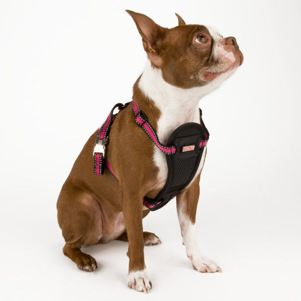 Brighten Up That Fall Walk With The Kong Reflective Dog Harness