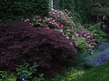 Pretty Plant Combinations - eclectic - Landscape - Chicago - Taylor Made Landscape Design, Inc.