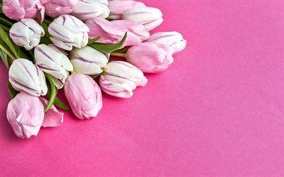 Scarica Sfondi Tulipani Rosa Fiori Di Primavera Tulipani Su Sfondo