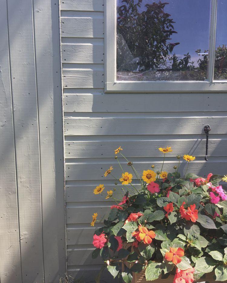 Plant Mom Aesthetic Wallpaper