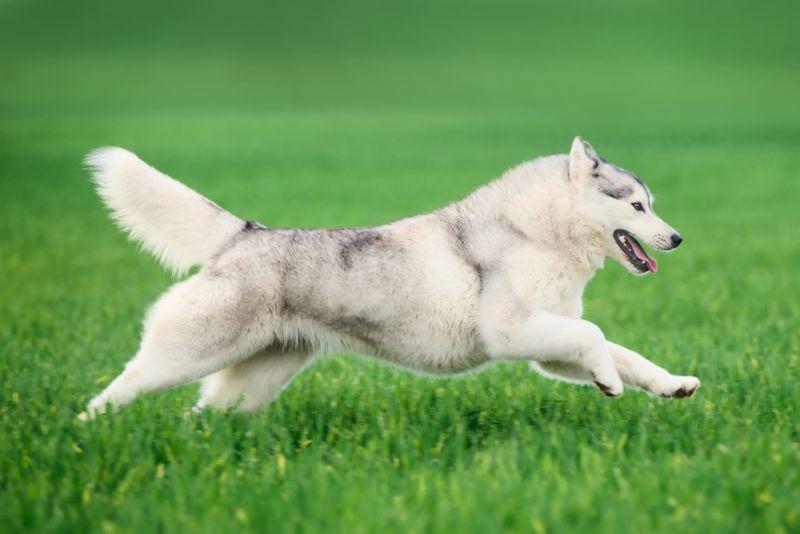 The Most Popular Dog Breeds In America Hyper Dog Dog Breeds