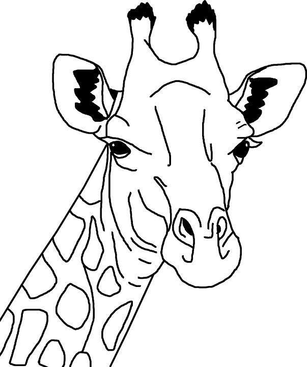 Free Image On Pixabay Africa Animal Black And White Giraffe Drawing Giraffe Coloring Pages Giraffe Illustration