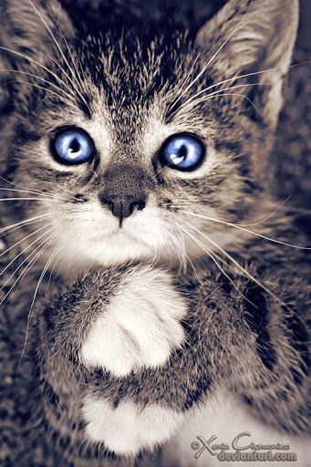 Pin By Vic Alcuaz On My Cat World Cute Animals Kittens Cutest Pets