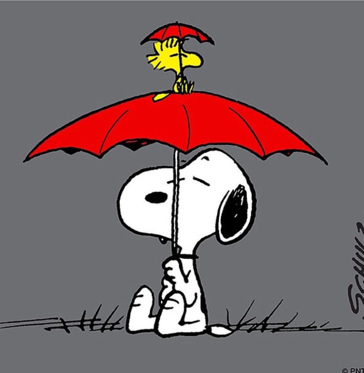 Snoopy Snoopy love, Snoopy and woodstock, Snoopy funny