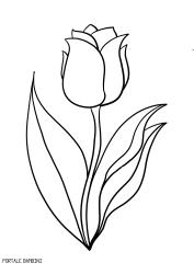 Stampate E Colorate I Tulipani Di Tulipani Fiori Da Stampare