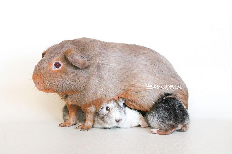 Toffee and her babies - by Marie-Sophie Germain - www.mariesophiegermain.com