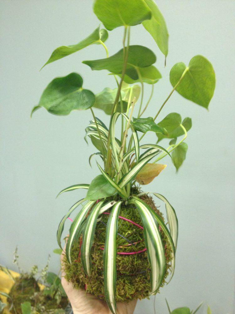 Japanische deko idee originelle kokedamas selber machen for Originelle zimmerpflanzen