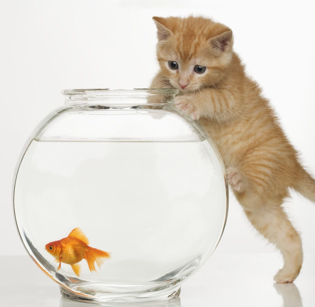 Cats In Care Everything That You Ever Want To Know About Cats Cats In Care The Ultimate Cats Care Guide Kittens Cutest Cats Animals