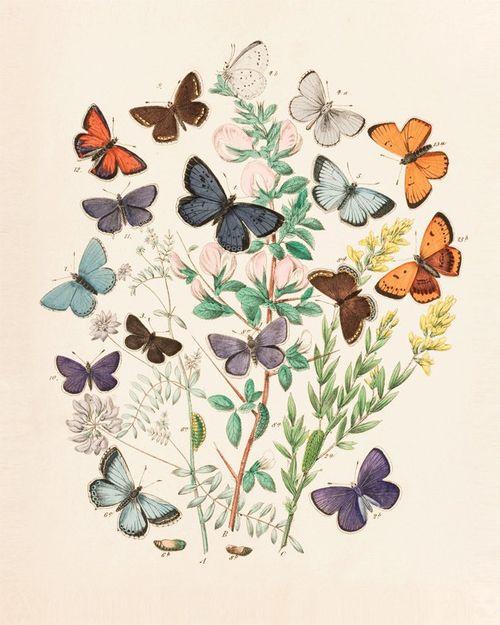 #vintage #butterfly #cute