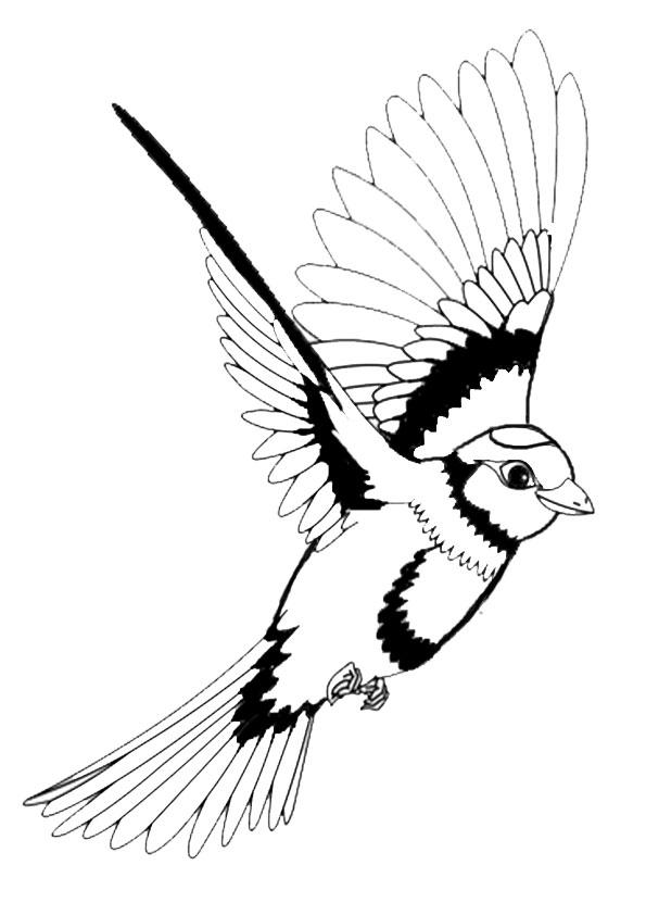 vogel malvorlagen vogel malvorlagen kostenlos druckbare