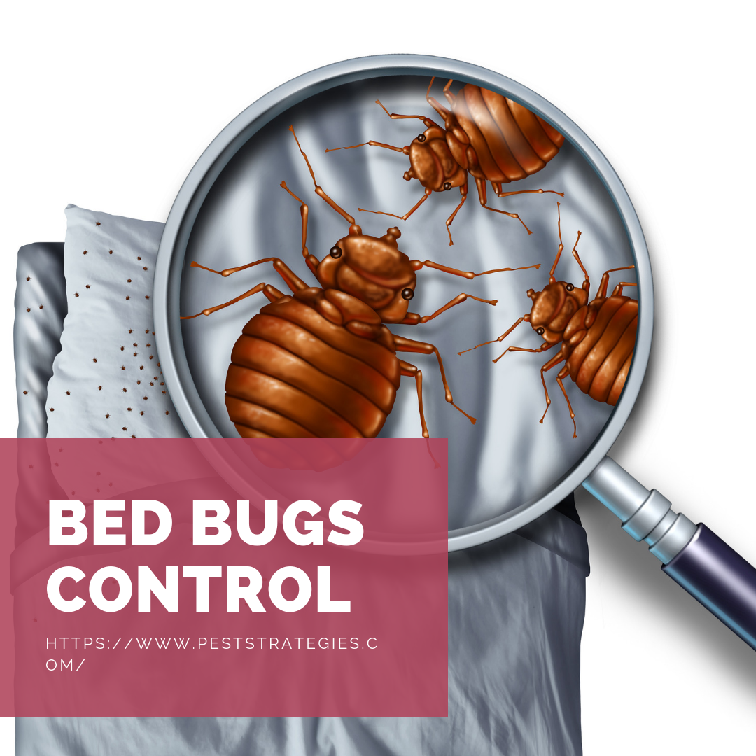 Get Rid of Bugs and Rodents Bed bugs, Bed bug control