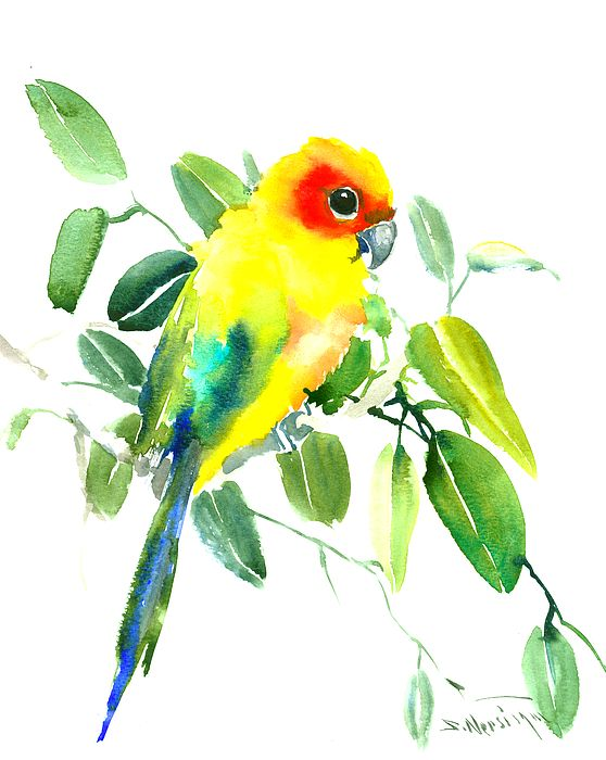 Sun Parakeet By Suren Nersisyan Birds Painting Parakeet Watercolor Bird
