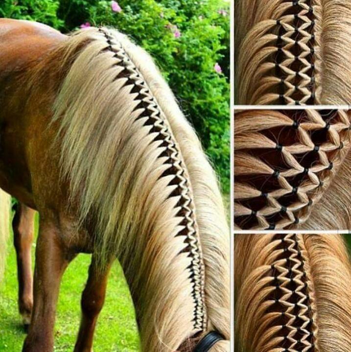 Beautiful Diamond Braid Das Schonste Bild Fur Hydrangea Landscaping Das Zu Ihrem Vergnugen Passt Sie Suchen Etwa In 2020 Pferde Frisuren Pferdemahne Pferdefrisuren