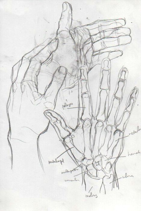 Enfer Anatomy Pinterest Beautiful Hands Character Design And