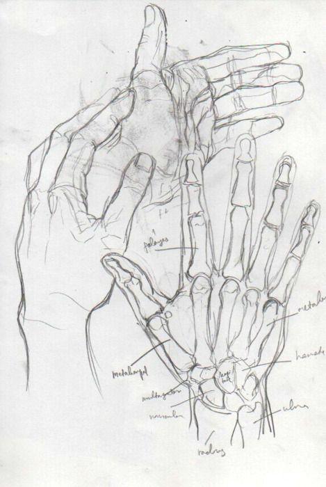 Photo of Anatomy Studies 01: the Hand | the leading tone