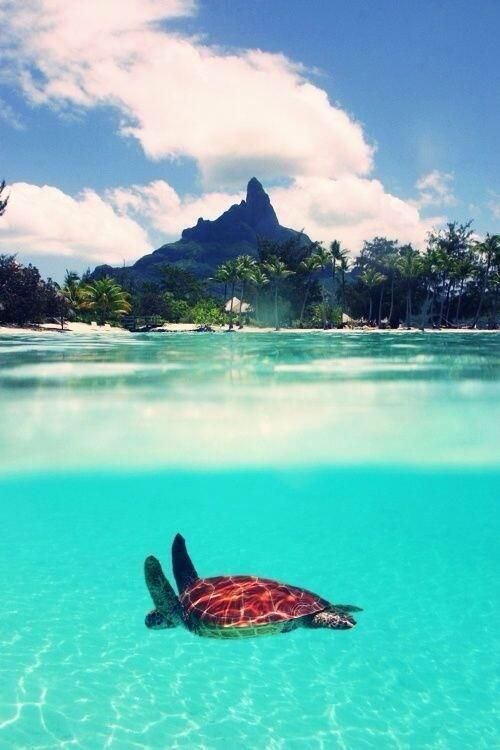 Beautiful water and sea turtle!