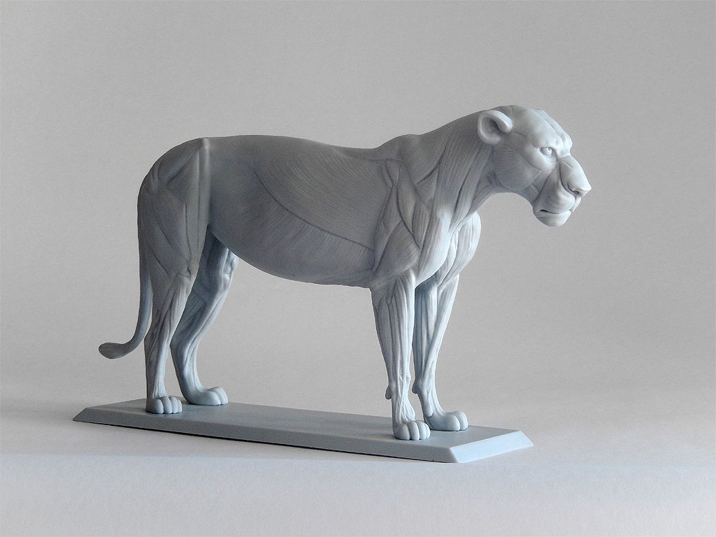 big cat anatomy sculpture | Animal Reference | Pinterest | Anatomy ...