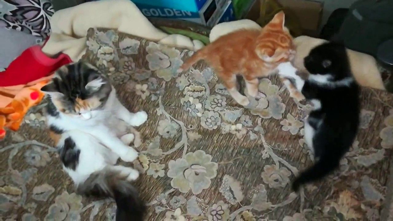 How Mom Cat React With Her Twins Fighting With Images Cat Mom Cats Cats Smelling