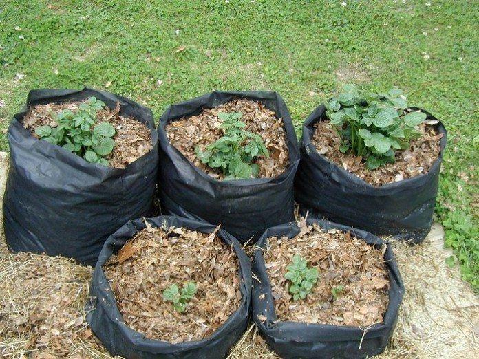 Potato Grow Bags Growing potatoes, Grow bags, Leaf mulch
