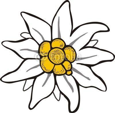 Stella alpina disegno cerca con google deco pinterest fleurs coloriage et dessin - Coloriage fleur edelweiss ...