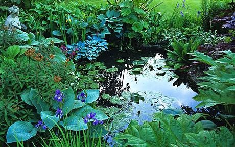 Pond   Green-fingered advice: keeping a healthy pond is a common concern ...