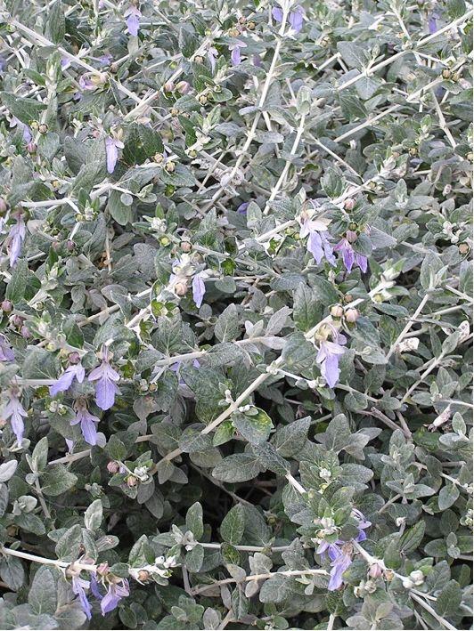 http://www.pepinieres-evrecy.fr/vegetaux/arbustes-a-fleurs/arbustes ...