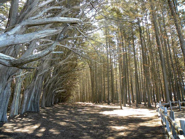 Picasa Web Albums Aimese Hurley California Su Moss Beach California Beach Photo Tree