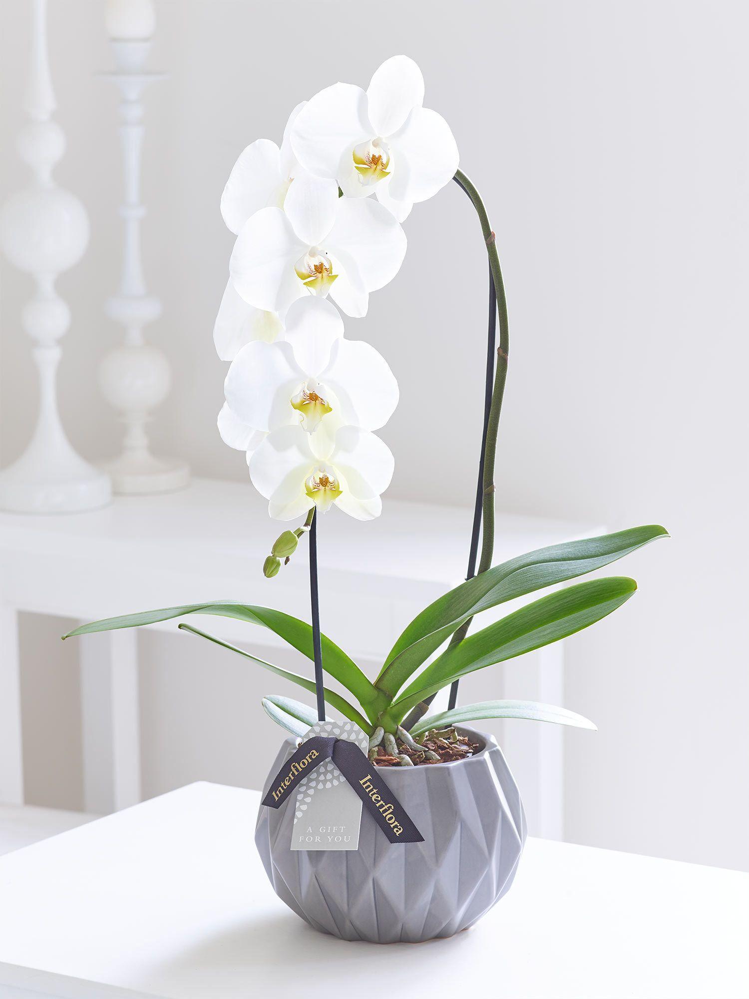 Cascade Orchid Com Imagens Arranjos Florais Modernos Arranjos